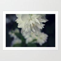 White Blossom Dew Art Print