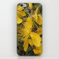 Beautiful St Johns Wort iPhone & iPod Skin