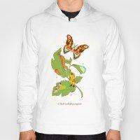 Papilio insulaeinfanum praegrandis Hoody