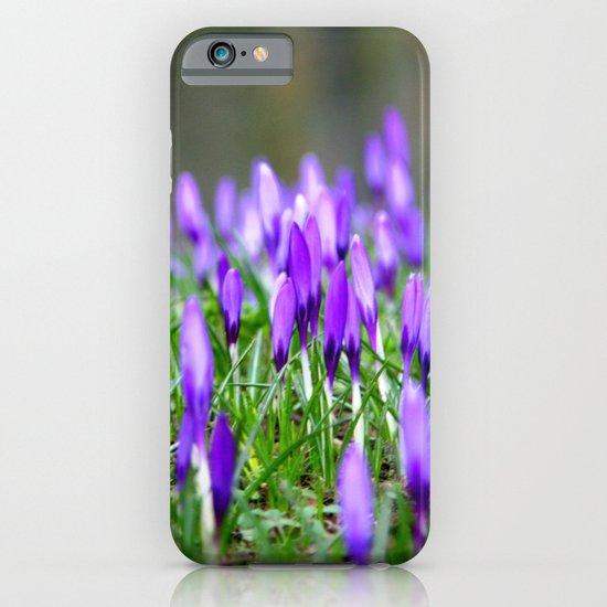 Crocus Blossom  iPhone & iPod Case