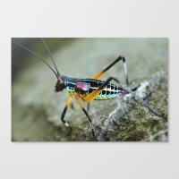 rainbow bug Canvas Print