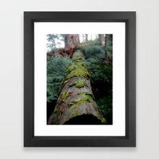Moss Log - Pyreness Framed Art Print
