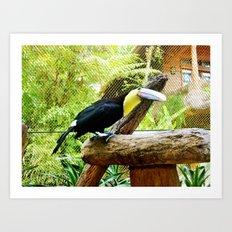 Curious Toucan Art Print