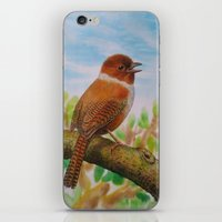 A Brown Bird iPhone & iPod Skin