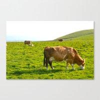 Cow Field Canvas Print