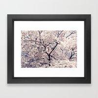 Cherry Blossom * Framed Art Print