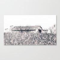 Lost in Cotton Canvas Print