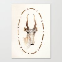 The Saiga Antelope Canvas Print