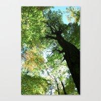 Woodland Canopy - Green Trees Canvas Print