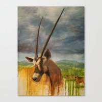 Gemsbok (Oryx Gazella) Canvas Print