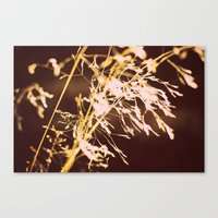 Golden Grass Canvas Print