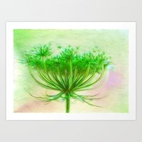 Queen Anne Lace Art Print
