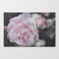 adorned Canvas Print