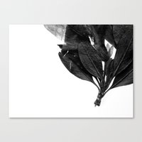 Evil Butterfly Canvas Print