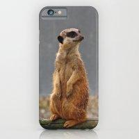 Meerkat No.1 iPhone 6 Slim Case