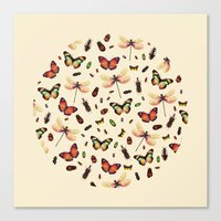 Insecta Canvas Print