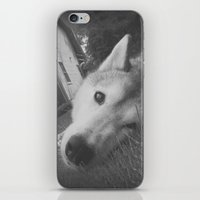 Husky 2 iPhone & iPod Skin