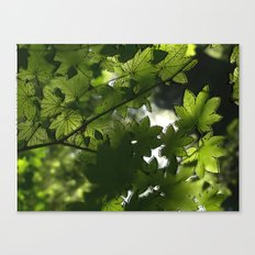 Leaf It To Me.  Canvas Print