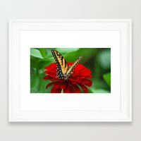 Framed Art Prints featuring Butterfly by Antonia Elena