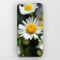Darling Daises iPhone & iPod Skin