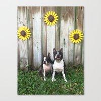 BT Sunshine Canvas Print