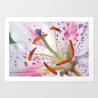 Summer Lily Art Print