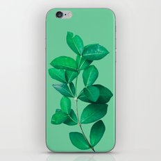 Green Leaves in Green background iPhone & iPod Skin