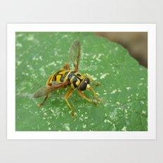 virginia flower fly 2016 II Art Print