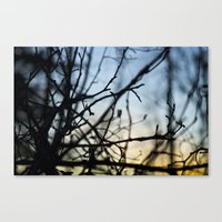 Winter Sunset In The Woo… Canvas Print