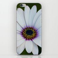Blue Eyed Daisy II iPhone & iPod Skin