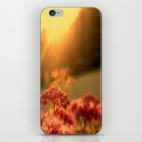 Pink bulb in the Sunrise iPhone & iPod Skin