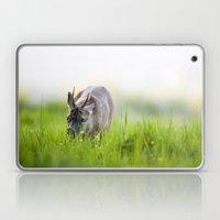 Roe Deer Grazing Laptop & iPad Skin