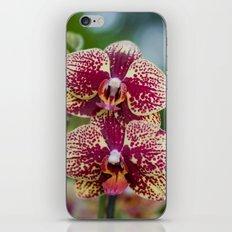 Orchid Phalaenopsis 7989 iPhone & iPod Skin
