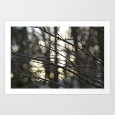 Twigs at Dusk Art Print
