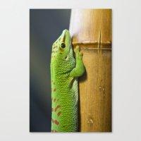 Mr. Green Canvas Print
