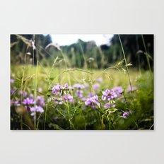 A Hint of Purple Canvas Print