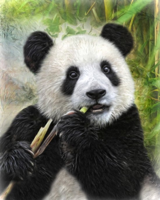 Panda Baby Art Print