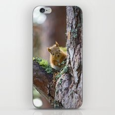 Baby Red Squirrel  iPhone & iPod Skin