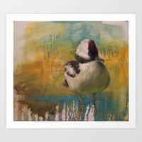 Ruddy Duck (Oxyura Jamai… Art Print