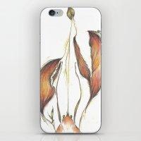 Lobster Tales iPhone & iPod Skin