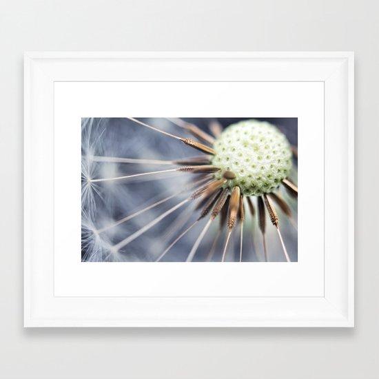 Dandelion fluff... 3 Framed Art Print