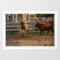 Frolicking Longhorns Art Print