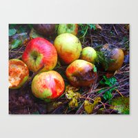 Apple of the Eye Canvas Print