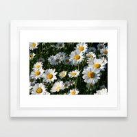 Daisy Love Framed Art Print