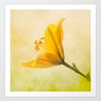 Lemon Lily Art Print
