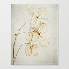 fading Canvas Print