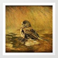 The Bathing Junco Art Print