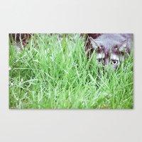 Hidden Cat Canvas Print