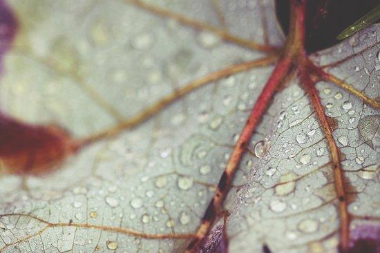 Feeling the Rain Art Print