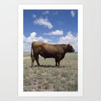 Bull, Texas Art Print